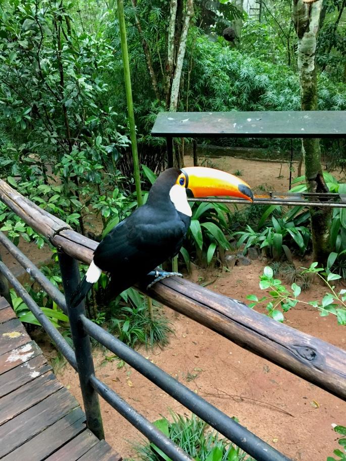 Tucano visto de perto no Parque das Aves, em Foz do Iguaçu